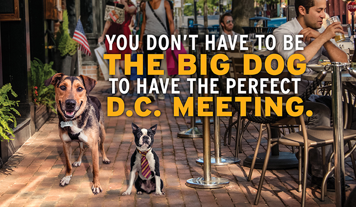 You don't have to be the big dog to have the perfect D.C. Meeting